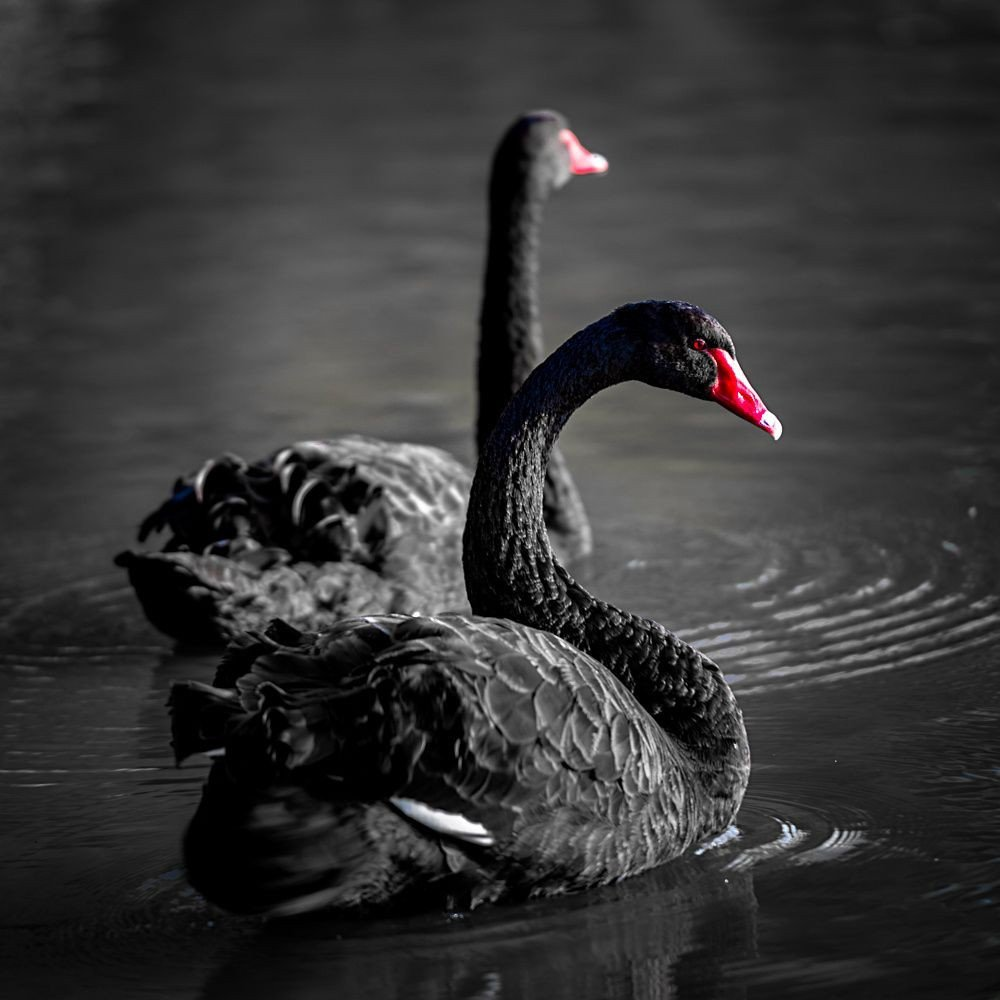 Is CoVid-19 Higher Education's Next Black Swan? What Does History Suggest?